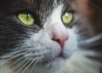 ochi de pisica