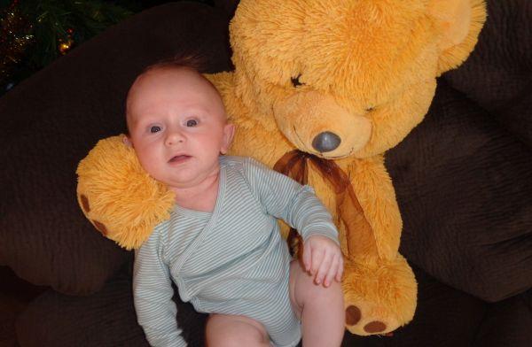 bebeluca urs